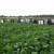 Hrvatska odlučna u proizvodnji neGMO soje, potencijala i domaćih sorti za daljnje širenje nam ne nedostaje