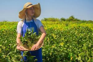 "Udruženje ""Dunav Soja"": Naš region ima izuzetan potencijal za proizvodnju soje"