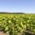 Koje su potrebe duvana za makroelementima u zemljištu?