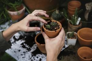 Kako uzgojiti kaktus iz sjemena