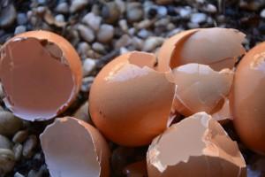 Ljuske jaja - pomoć rajčici, paprici i patlidžanu