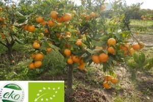 Zašto biram eko, radionica Hrvatskog saveza udruga ekoloških proizvođača