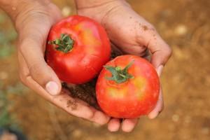 Eko poljoprivreda zadržava ugljik u tlu - zašto je to dobro?