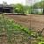 Zaštitite vrt i voćnjak prirodnim putem - biljkama, kukcima i kopanjem