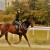 Prva Endurance utrka konja na zagrebačkom Hipodromu