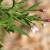 Vrbovica: Invazivni korov je posledica preterane upotrebe glifosatnih herbicida