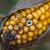 Mikotoksini u hrani za životinje - potencijalna opasnost po zdravlje ljudi