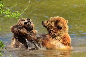 U 15 godina zabilježena su 664 napada medvjeda na ljude, koji su najčešći uzroci?