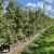 Jesenska prihrana eko gnojivima za ravnomjerno otpuštanje hraniva