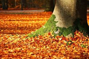 Naknadu za korištenje općekorisnih funkcija šuma plaćat će manje obveznika?