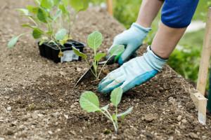 Farma u Sitnešima ugostila 350 mladih iz cijelog svijeta