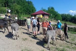 Alen Jusupović oduševio farmom magaraca goste iz Hrvatske, Crne Gore i BiH