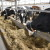 HPK zbog krize stočarstva zatražila isplatu avansa potpora, ali i sastanak u Ministarstvu