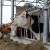Proizvođači, ispunite Upitnik o potrebama ulaganja u sektor mljekarstva
