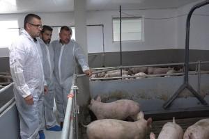 Najmodernija frama za tov svinja otvorena u Zasavici