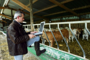 Slaba iskorišćenost sredstava iz EU fonda za ruralni razvoj