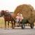 10 poklona za Valentinovo za najdražeg farmera