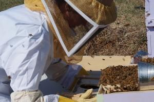 Besplatna škola pčelarstva za početnike