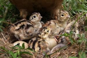 Razdoblje mladunčadi  - dovitljivost prirode i roditeljska ljubav