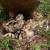 Period mladunaca  - dovitljivost prirode i roditeljska ljubav