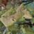 Zlatna žutica vinove loze: Objavljena karta demarkiranih područja za 2021.