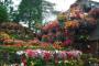 Cveće -  jedno od najlepših dela prirode