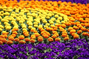 53. međunarodna vrtna izložba Floraart na zagrebačkom Bundeku