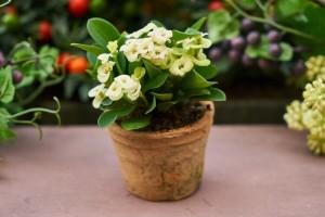 Njegujte sobno cvijeće i zimi, evo i kako