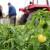 Međunarodni kongres o hrani ove godine online - aktuelne teme i povećan izvoz obećavaju veliki odziv