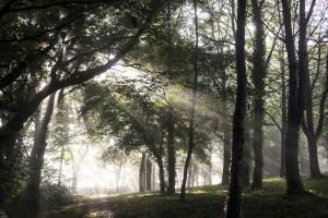 Slučajno posekli stotine mladog drveća u parku