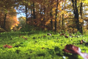 Jedna umjesto četiri Uredbe: jednostavnije do osnivanja prava građenja na šumskom zemljištu