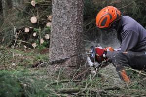 Nedovoljna obnova šuma u Federaciji FBiH - šta kaže izvještaj revizije?