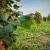 Tomislav Haršanji: U čemu vidim vrijednost poljoprivrede