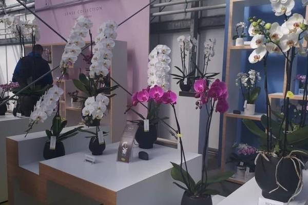 Martina i Danijel Vukoja: Nizozemski uzgoj cvijeća je fascinantan, kao u SF filmovima