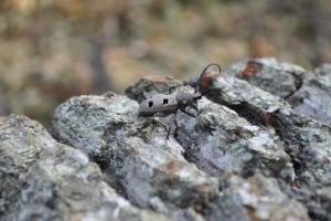 Hrvatska je s aspekta biološke raznolikosti jedna od najbogatijih zemalja Europe