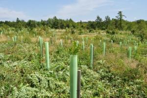 Šumarstvo je bitan faktor ruralnog razvoja, u tijeku su konverzije sastojina i kultura
