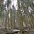Šumarija Jasenak: Neiskorišteni turistički potencijal šuma i planina