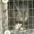 Dražen Sedlar vlasnik je farme divljih zečeva koje uzgaja za lovišta