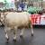 Prosvjedi urodili plodom, Francuska stoji iza svojih poljoprivrednika
