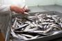 Raste francuski uvoz ribe!