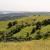 Volonteri žele da ožive stepski pašnjak na Fruškoj gori