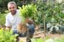 Zašto je zanemarena domaća proizvodnja celera?