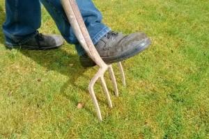 Kako brinuti o travnjaku tokom zimskog perioda?