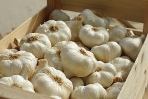 Kako pripremiti češnjak za čuvanje tijekom zime?