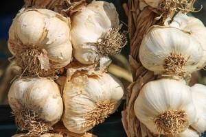 Suša: Početak sezone češnjaka u Češkoj obilježen visokom cijenom
