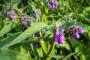 Gavez, lijek za čovjeka i hrana za biljke