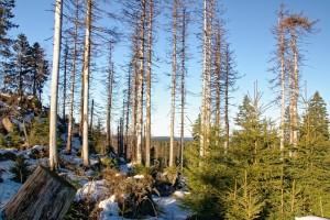 Veće EU: Hitno odrediti prioritete u cilju zaštite svetskih šuma