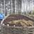 Rastvor glistenjaka i vode sprječava pojavu čak i kruškine buhe
