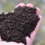 Napravite kvalitetno organsko đubrivo pomoću kalifornijskih glista
