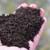 Kako koristiti glistenjak - humus kalifornijskih glista